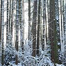 Snow Covered Winter Pine Trees by Alyson Fennell