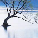 One Tree.....New Zealand by Imi Koetz