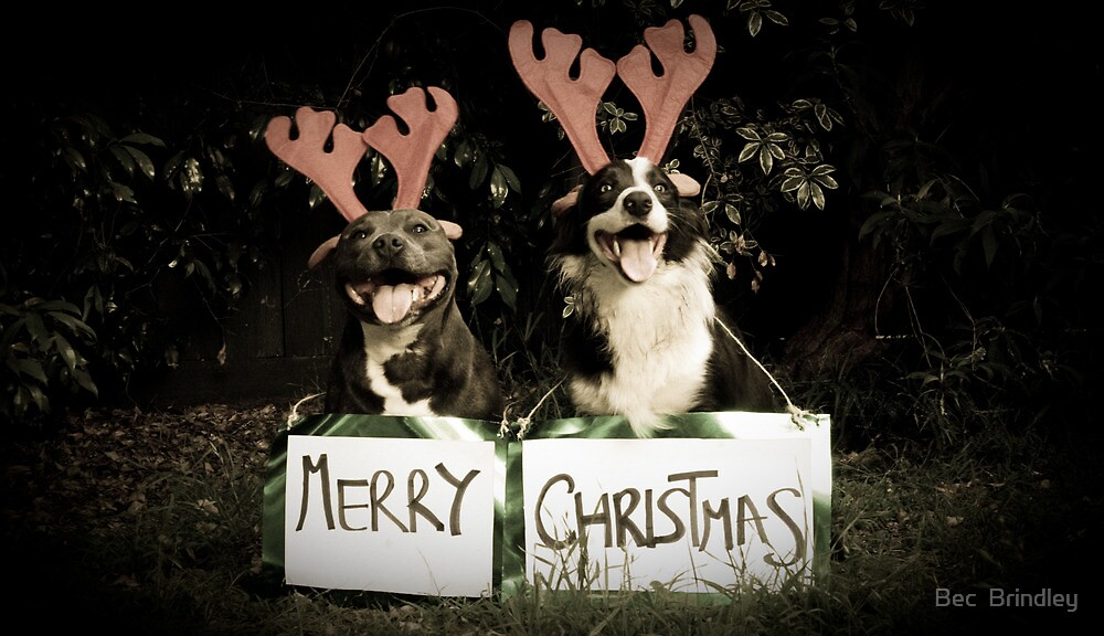 Merry Christmas!! by Bec  Brindley