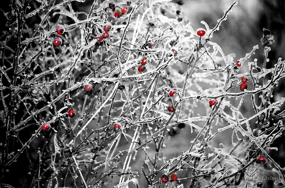 Nature's Christmas Ornaments by Mike Oxley