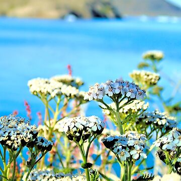 Flowers in Greenland by MAMMAJAMMA