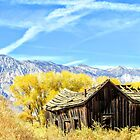 Fall Colors by marilyn diaz