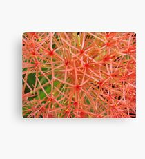 Red Ball-(Floral Macro) Canvas Print