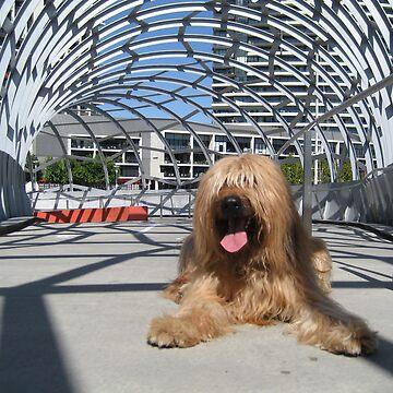 Oscar at Webb Bridge, Melbourne, Australia #2 by BriardRescue