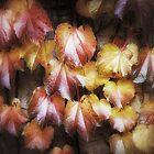 Colours of Autumn by JOSEPHMAZZUCCO