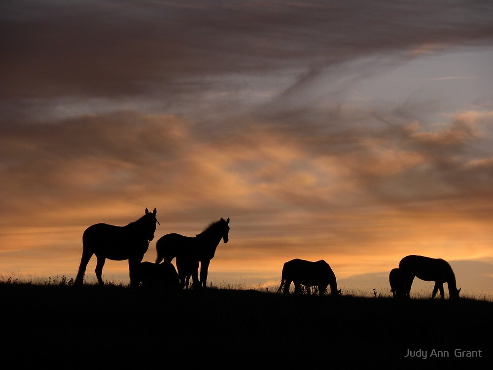 Early Morning Silhouette  by Judy Grant