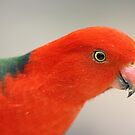 King Parrot by Linda Sass