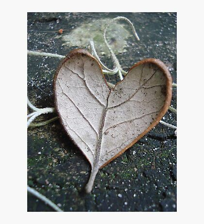 "The ""I Love You"" Leaf Photographic Print"