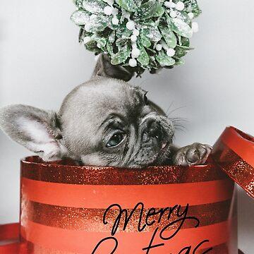 Cute French Bulldog Christmas Card by mochachip