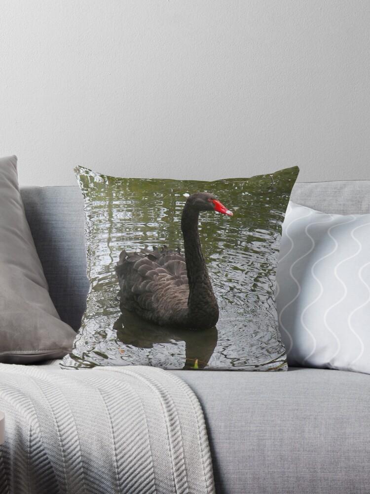 Black Swan by ColinBoylett