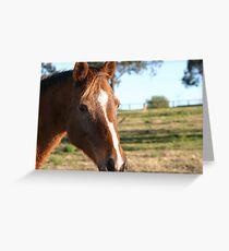 Brown Horse - Maraylya Grußkarte