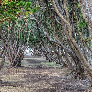 Path Tree Canopy by urbanfragments