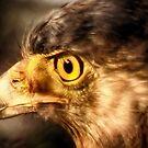 Vigil Hawk. by Sagar Lahiri