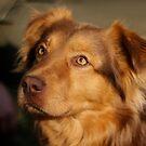Hund  von laura-S