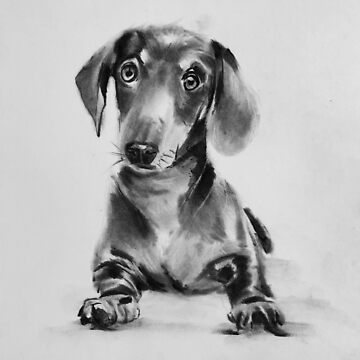 dachshund by stoekenbroek
