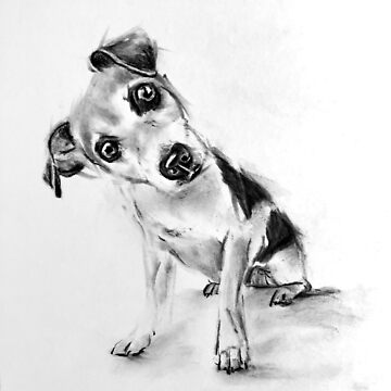 curious dog by stoekenbroek