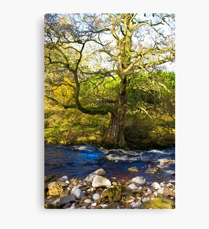 River Cover #2 Canvas Print