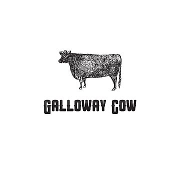 Galloway Cow | Animal Art by CarlosV