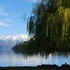 Tree at Lake Wanaka.....New Zealand by Imi Koetz
