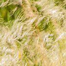 Springtime by metriognome