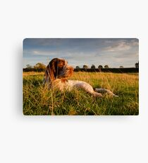Spinone Puppy Sunset Canvas Print