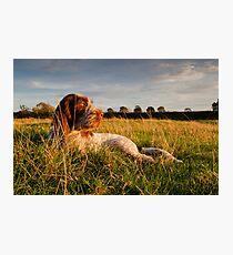 Spinone Puppy Sunset Photographic Print