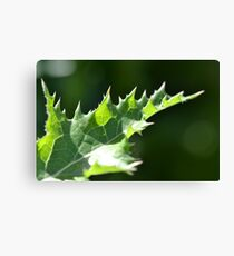 Thistle Scales Canvas Print