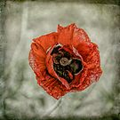 We Will Remember by Sylvia Labelle