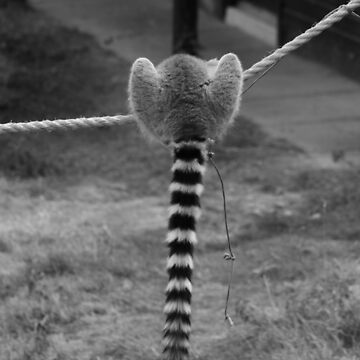 Lemur Life Is All About Balance by PathfinderMedia