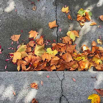 Autumn Leaves On The Ground by urbanfragments