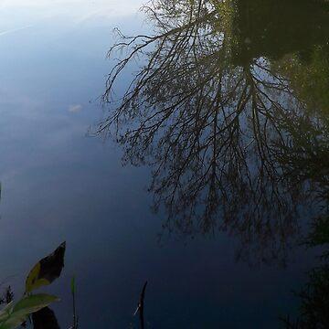 Tree in water by robelf