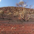 karajini national park after the fire, panorama  by dmaxwell