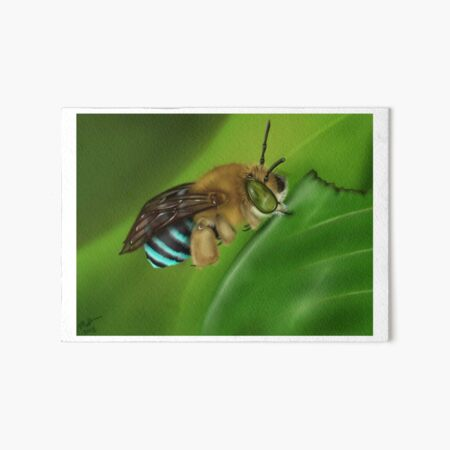 Blue-Banded Bee Art Board Print