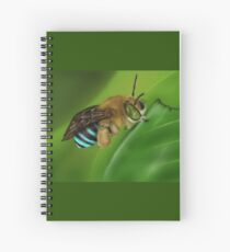 Blue-Banded Bee Spiral Notebook