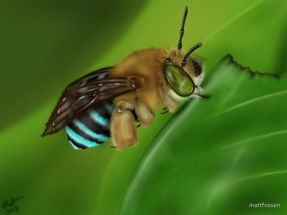 Blue-Banded Bee by mattfossen