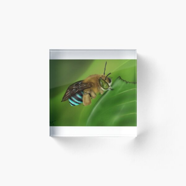 Blue-Banded Bee Acrylic Block