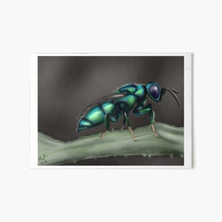 Cuckoo Wasp Art Board Print