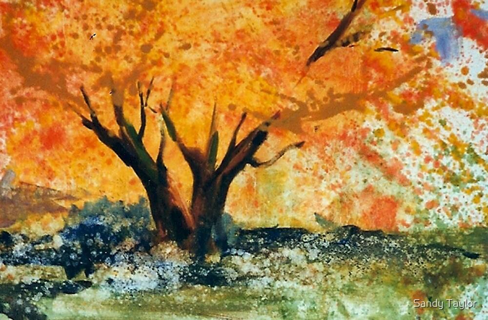 Sugar Maple  by Sandy Taylor