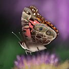American Painted Lady Butterfly by mattfossen
