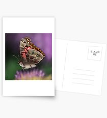 American Painted Lady Butterfly Postcards