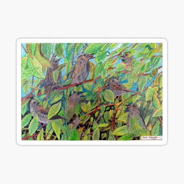 431 - SPARROWS (A) - DAVE EDWARDS - COLOURED PENCILS - 2018 Sticker