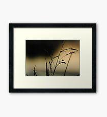 """""""Very Grassy"""" (1/13) Framed Print"""