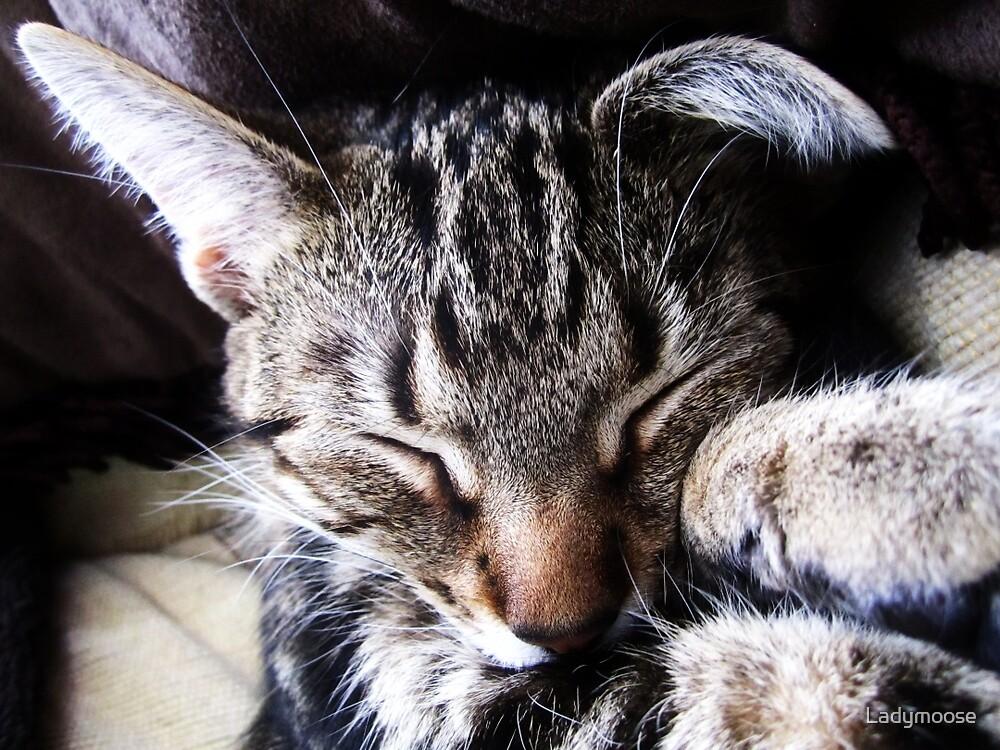 The Sleepiest Sleeps by Ladymoose