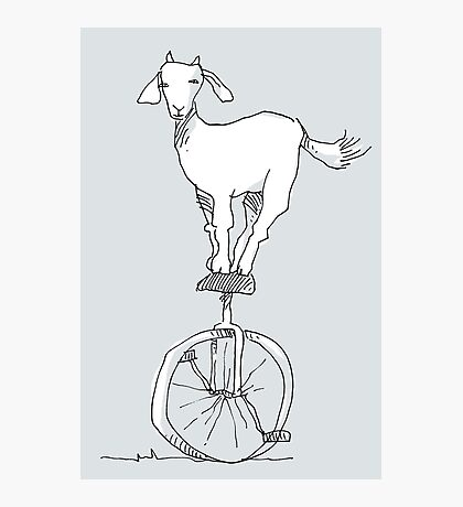 Goat on a unicycle Photographic Print