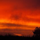 Red Sky in the Morning by Christopher Wardle-Cousins