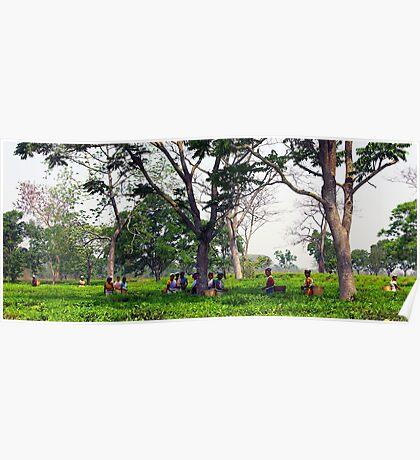 Tea pickers in a tea garden in Assam, India. Poster
