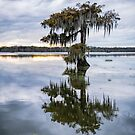 Moss Draped Cypress at Lake Martin  by Bonnie T.  Barry
