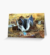 Blue-footed Booby: Mating Dance Greeting Card