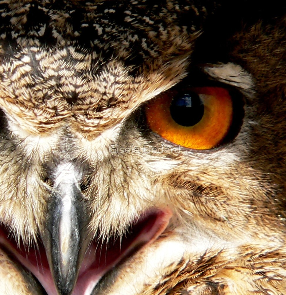 Eye see by Gisele Bedard