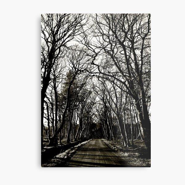 Road to Laurieston: Winter Trees Metal Print